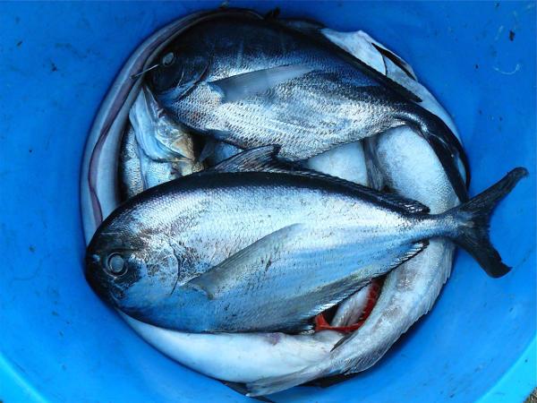 L'océan nourrit ce que nous mangeons