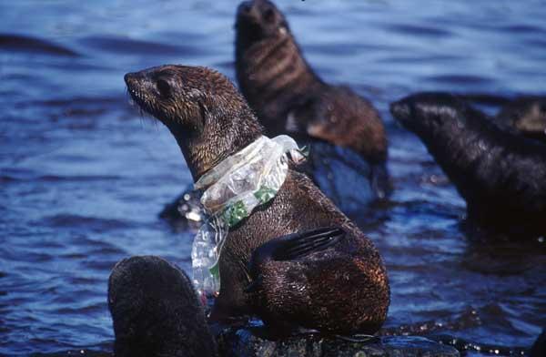 un oc an de plastique le plastique tue les animaux marins. Black Bedroom Furniture Sets. Home Design Ideas