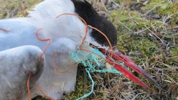 Norway bird (BBC)